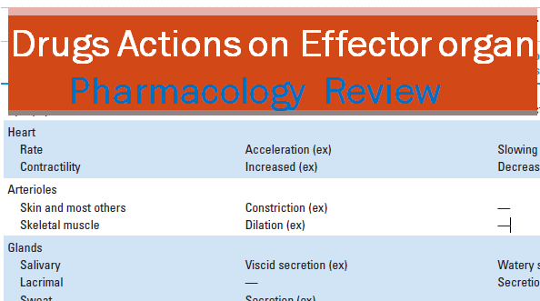 study of drug action and autonomic Quizlet provides quiz 2 pharmacology drug action activities, flashcards and games start learning today for free.