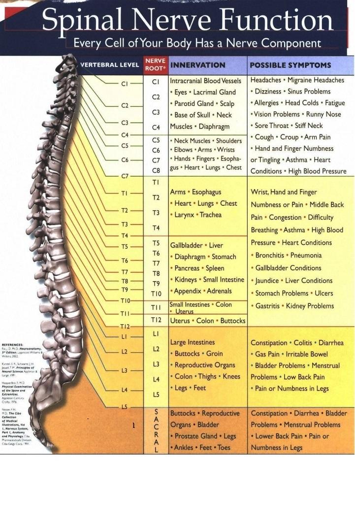 SpinalNerveFunctionjpg_Page1
