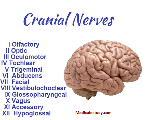 carnial-nerves-1
