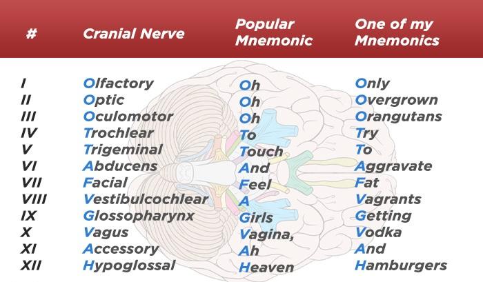 popular-cranial-nerve-mnemonic