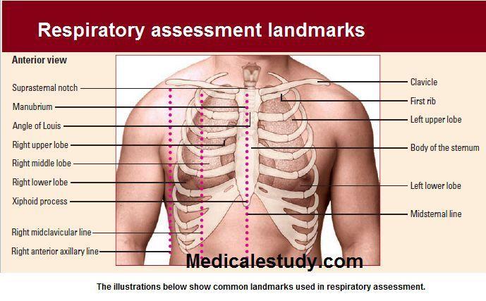 respiratory-assessment-landmarks