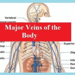 major-veins