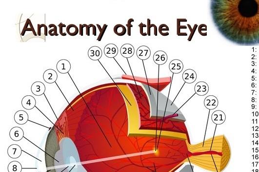anatomy-of-the-eye